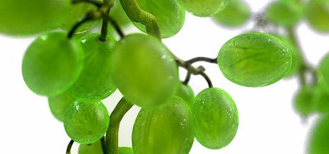 grapes050907.jpg
